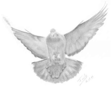 Szabadon mint a madár
