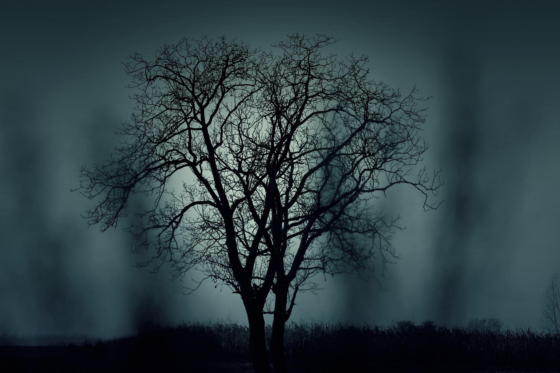 2019_1029212207_tree-407256_1920.jpg